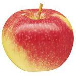 tipos de manzanas. mcintosh